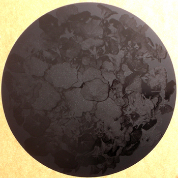Capucine Noir  Noir. <BR>Capucine Black Black.</I>