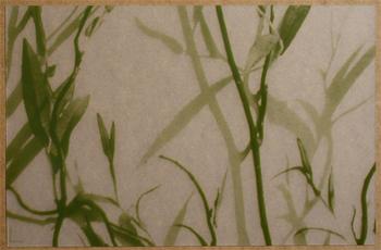 Feuillage Translucide Vert. <BR><I>Feuillage Clear Green.</I>