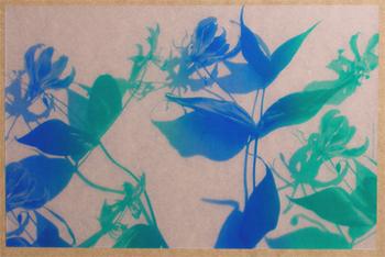 Gloriosa Translucide Bleu & Turquoise. <BR><I>Gloriosa Clear Blue & Turquoise.</I>