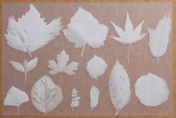 Herbier Translucide Blanc. <BR><I>Herbier Clear White.</I>