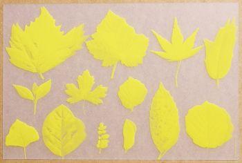 Herbier Translucide Jaune. <BR><I>Herbier Clear Yellow.</I>