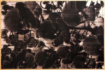 Orchidée Translucide Noir. <BR><I>Orchidée Clear Black.