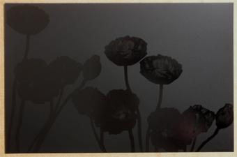 Pavots Noir Noir <BR><I>Pavots Black Black.</I>
